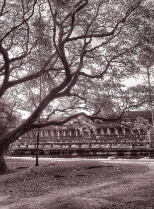 Old Bonsai-style tree at Angkor Wat