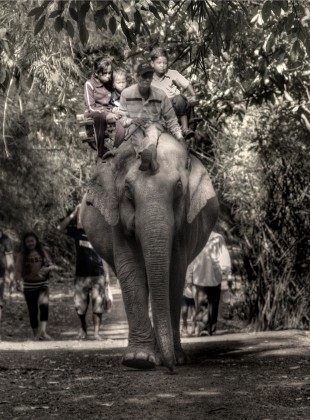 riding an elephant down a jungle path