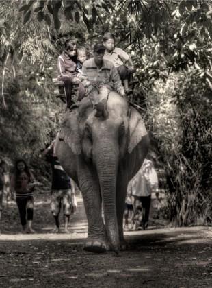 riding an elephant down a jungle path