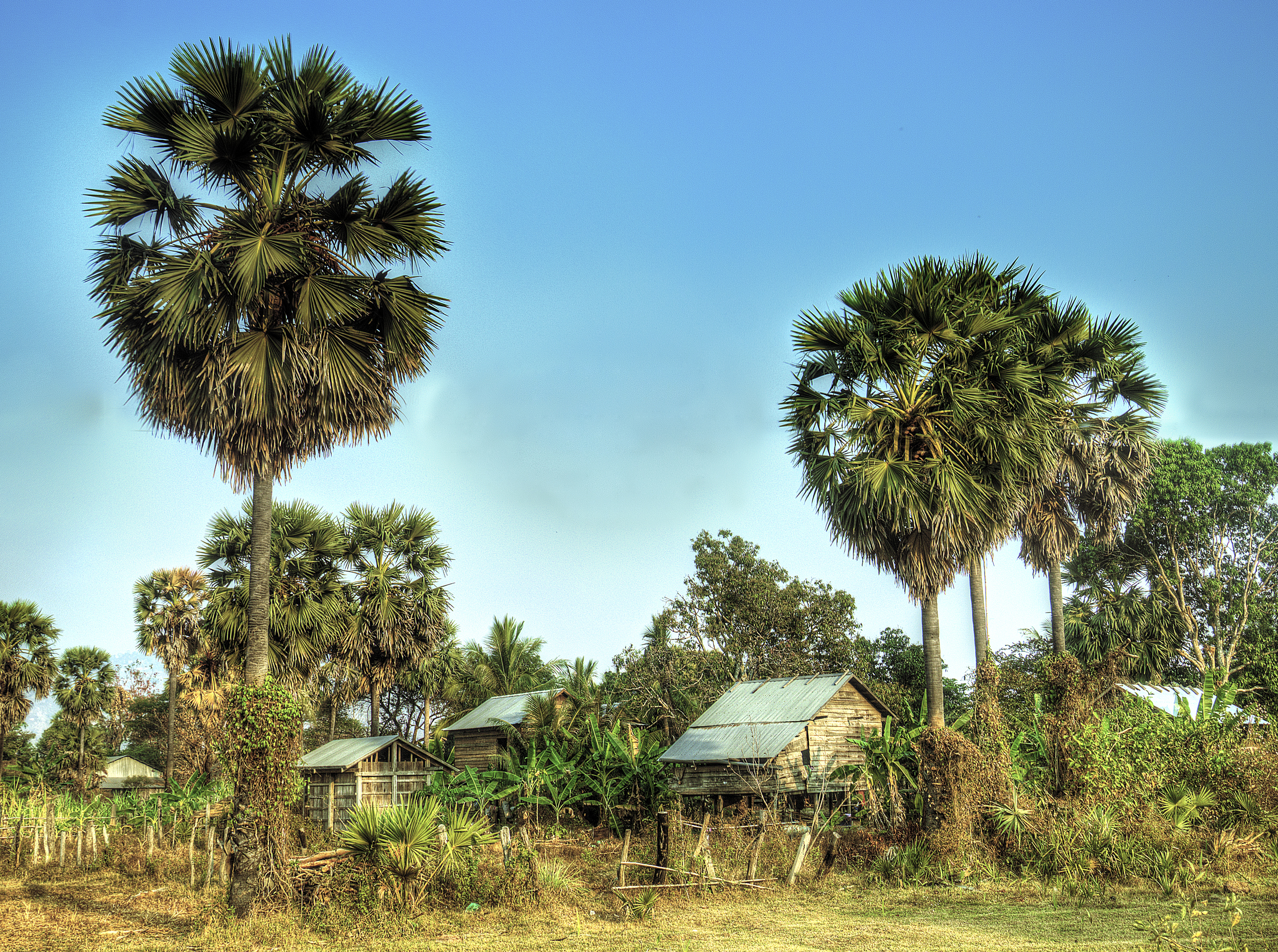 Cambodian Homestead